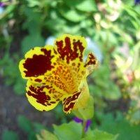 Цветочный леопард :: Полина Шифман
