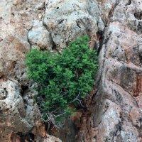 дерево и камни :: Сергей Старовойт