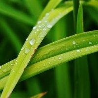 После дождя!)) :: Дмитрий Ким