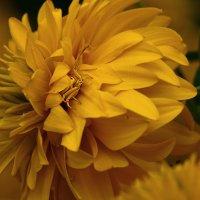 желтый цветок, такой же паучок :: ольга кривашеева