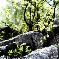 Каменные ступени :: Ирина Костарева