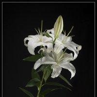 Лилия в цвету... :: Jossif Braschinsky