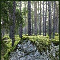 Лес камней. :: Jossif Braschinsky
