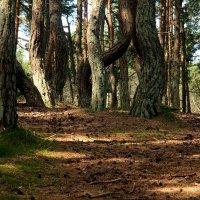 Сказочный лес. :: Татьяна Беляева
