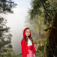 В лесу :: Евгений Наместников