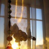 Орхидея в закатном окне. :: Юлия Иванова (Константинова)