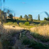 Дорога в поле :: Sergey Serov