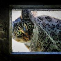 Смотрела кошка в чужое окошко..... :: Елена Kазак
