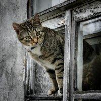 Из старого окошка на мир смотрела кошка. :: Елена Kазак