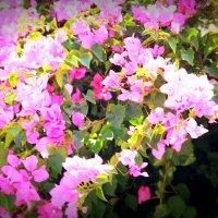 цветы2 :: Лена בחירקין