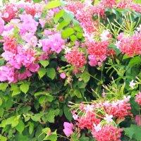 цветы :: Лена בחירקין