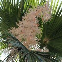 пальма :: Лена בחירקין