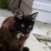 посмотри на мир его глазами! :: Юлия Чугунова
