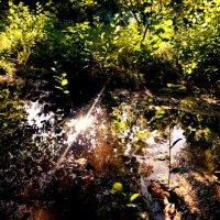 Лучик солнца :: Анна Ишкаева