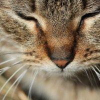 просто кошка :: Анастасия Марченко