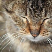 кошка :: Анастасия Марченко