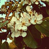Весна :: Kristina Kashtanova