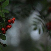 А лес такой загадочный... местами :: Юрий Морозов