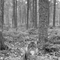 Встреча в сказочном лесу :: ID@ Cyber.net