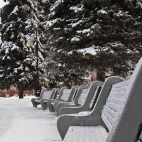 зимний парк :: Дарья Тихонова