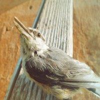 Ноги, крылья, главное-клюв!!! :: Ser Gun ...