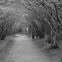 в парке :: валентин яблонский