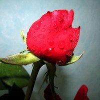 росинки счастья и любви :: Marina Timoveewa