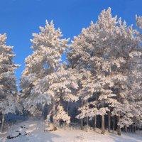 Серебристая зима :: Oleg Gabov