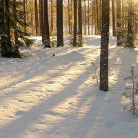 мороз и солнце, день чудесный... (п.Орехово) :: Дмитрий Родышевцев