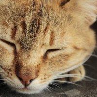Кошка :: Надя Тарасенко