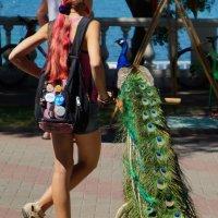 Вот это хвосты! :: Наталия Коваленко