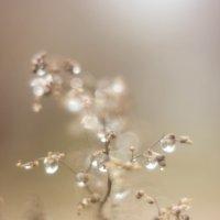 After the rain :: Екатерина Квинт