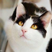 Котик :: Анастасия Фадеева