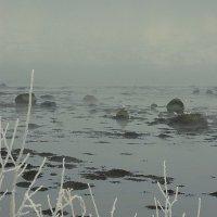 Туман над заливом :: Владимир Стаценко