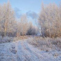 дорога в зиму :: Седа Ковтун