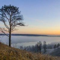 Туман :: Владимир Клюнк