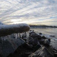 зимний Балтийский берег :: Елена