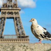Парижанин :: Наталия