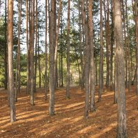 Посадки леса :: Олег Афанасьевич Сергеев