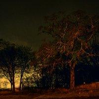 Ночной пейзаж :: Сергей