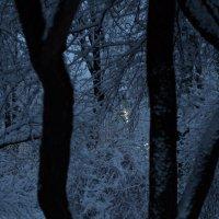 зимние зарисовки :: Вадим Бурмистров