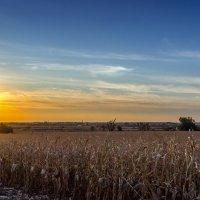 Кукурузное поле на закате. :: Владимир