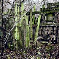 Старый забор :: Денис Масленников