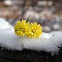 Когда-то расцветут подснежники.. :: Андрей Заломленков