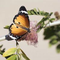 Бабочка :: Юрий Тойбин