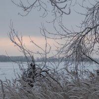 Пасмурное утро. :: Elena Sartakova