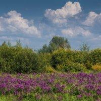 Вспоминая лето :: Виктор Четошников