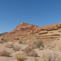 А вот и пустыня. :: Пётр Беркун