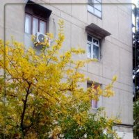 осень в городе :: maxim
