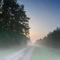 Вечерний туман под лесом. :: Владимир M